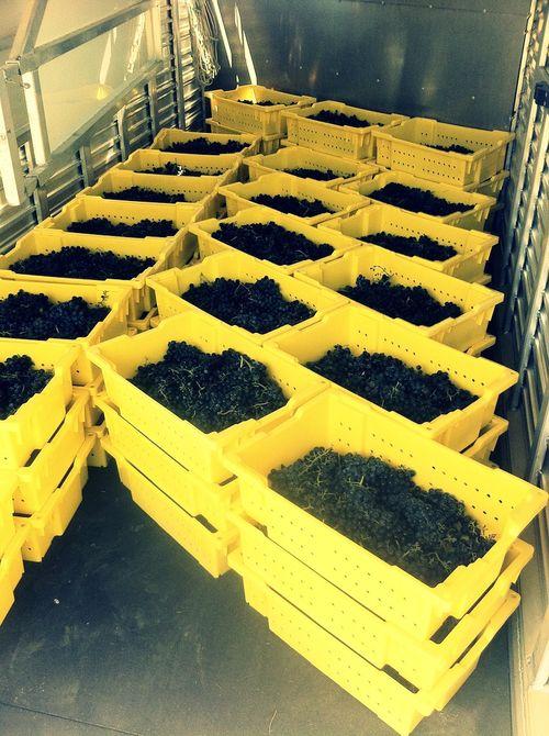 Harvest lugs twcq