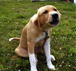 Puppy Shaggy TWCQ