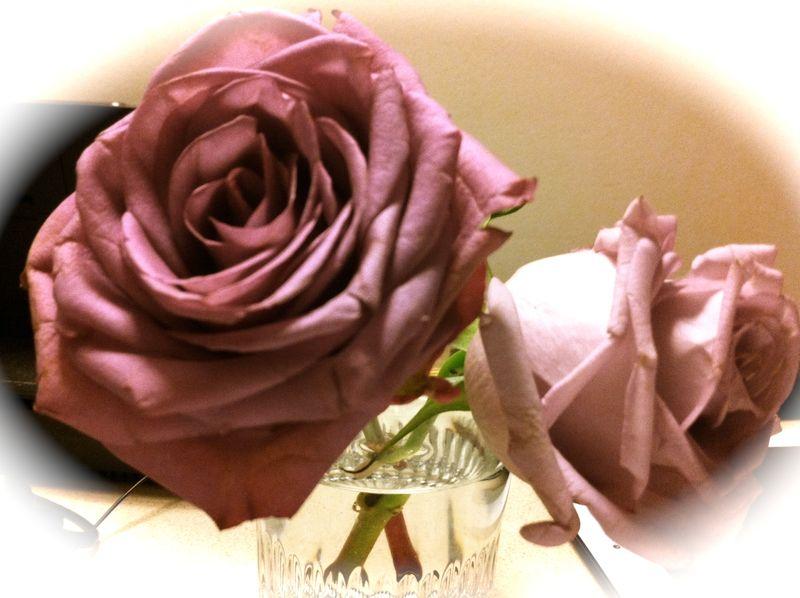 Roses TWCQ