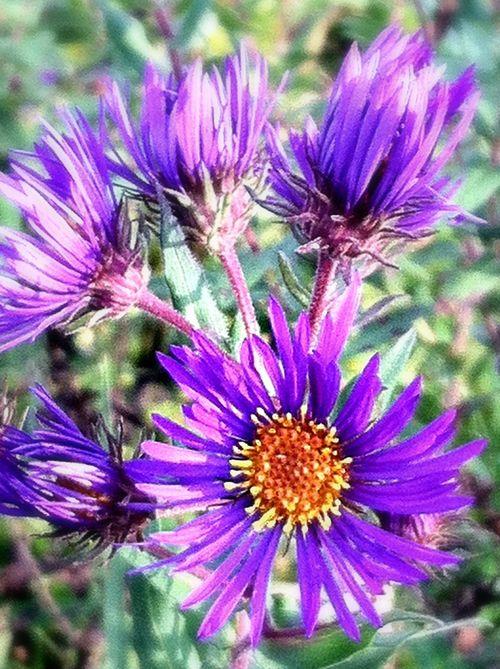 Oct 1 flowers twcq