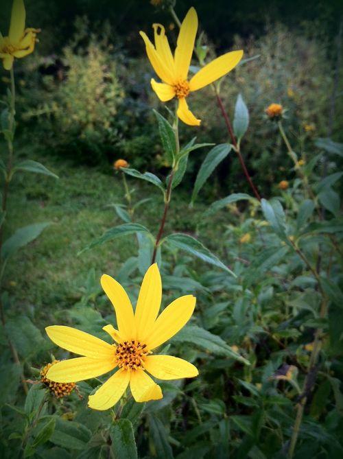 Fall flowers twcq