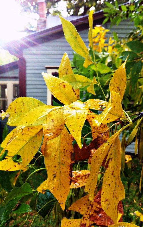 Leaves and house twcq