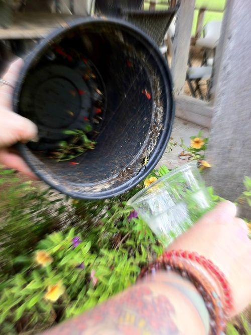 Garden spider twcq
