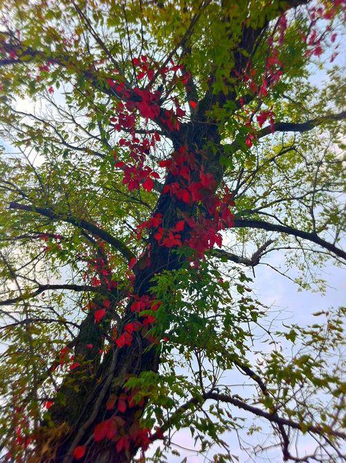 Tree twcq